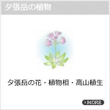 夕張岳の植物
