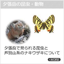 夕張岳の昆虫・動物