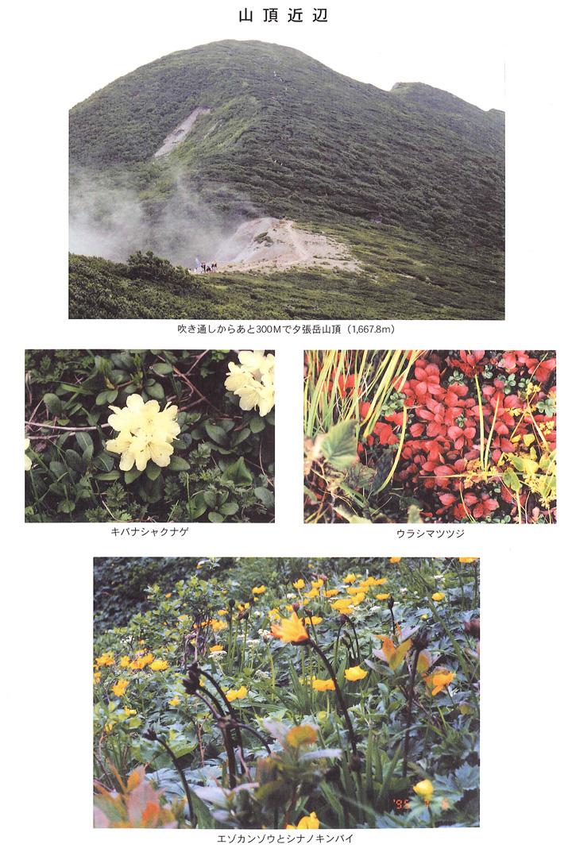 山頂近辺 ウラシマツツジ キバナシャクナゲ エゾカンゾウ シナノキンバイ